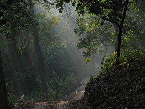 A view of the forest during a jeep safari at Jim Corbett National Park. Photo via Wikimedia Commons by netlancer2006.