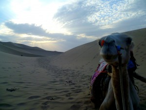 Camel riding in China