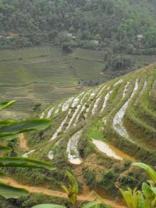 Terraced fields in Vietnam