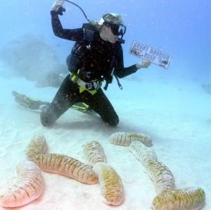 Sea Cucumbers!