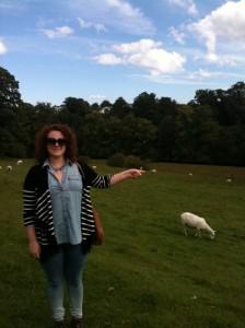 Look, a sheep!