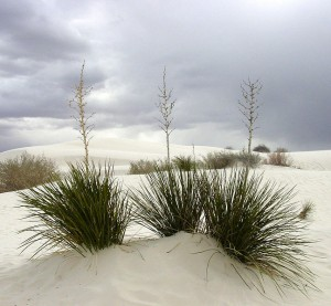 White Sands National Monument - New Mexico. Photo via Wikimedia, by David Jones.
