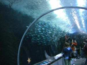 Walk through this awesome aquarium tunnel! Via Wikimedia, by Veronidae.