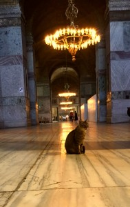 Cat in Hagia Sophia. Photo courtesy of Hannah Yerington.